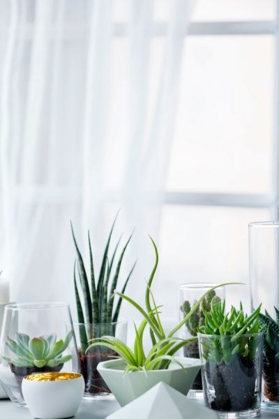 Bring the outdoors inside your home with plants and flowers