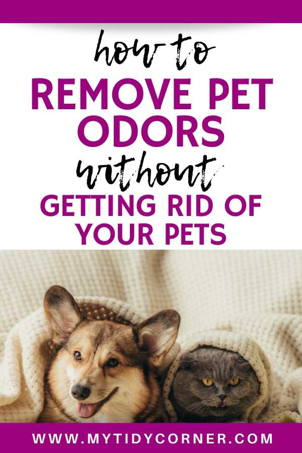How to get rid of pet odors from your house