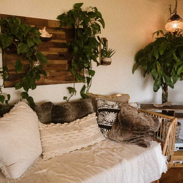 Green plants can make your home cozy